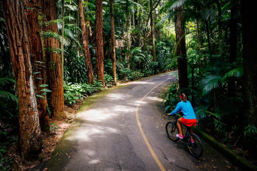 Cycling through the Tijuca National Park, surrounded by trees.